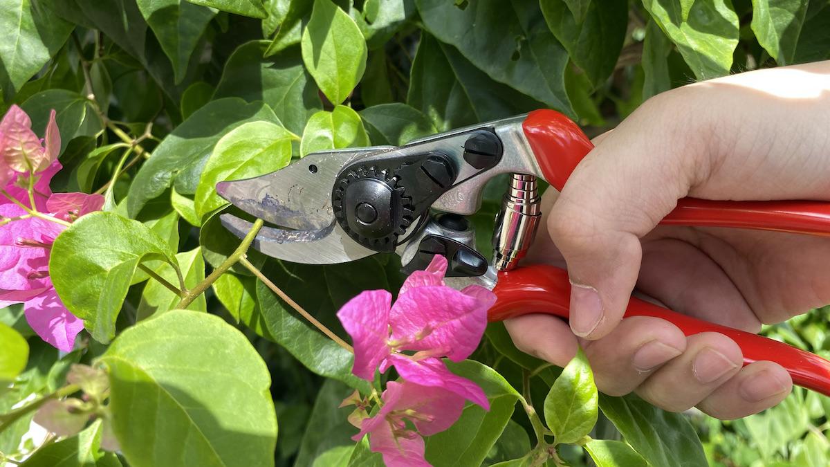 Kéo cắt tỉa hoa giấy FELCO 14
